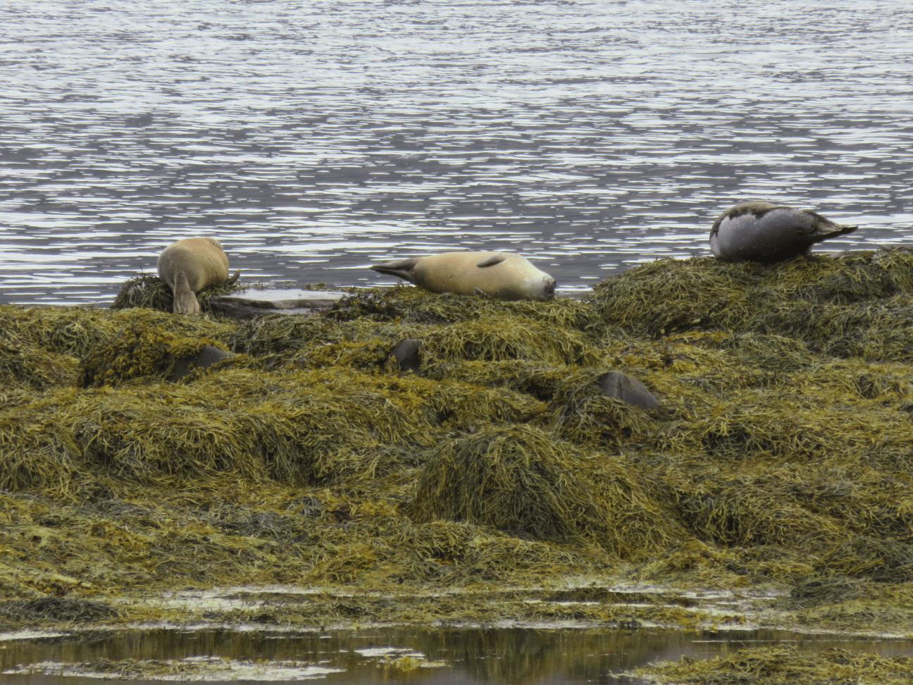 phoques fjords